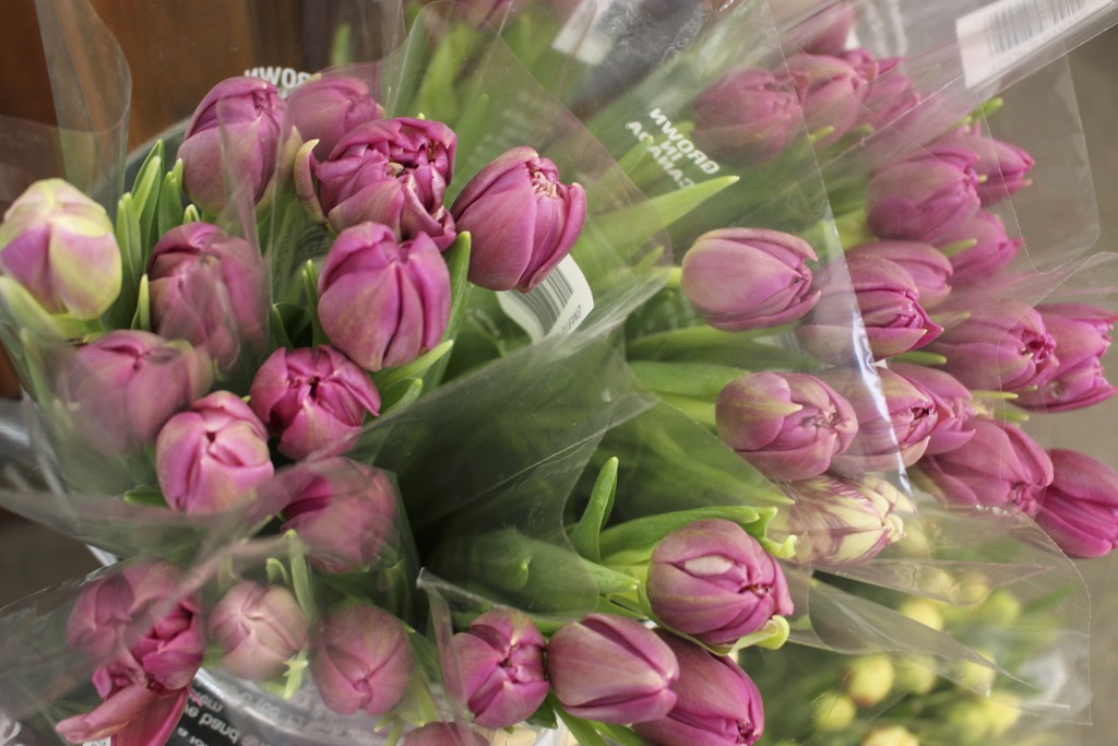 Pink Seasonal Flowers - Ralphs Farm Market Langley BC