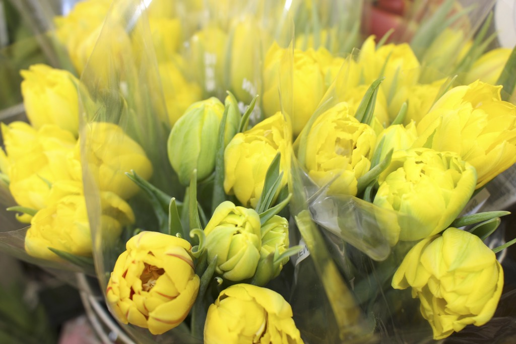 Yellow Spring Flowers - Ralphs Farm Market Langley BC